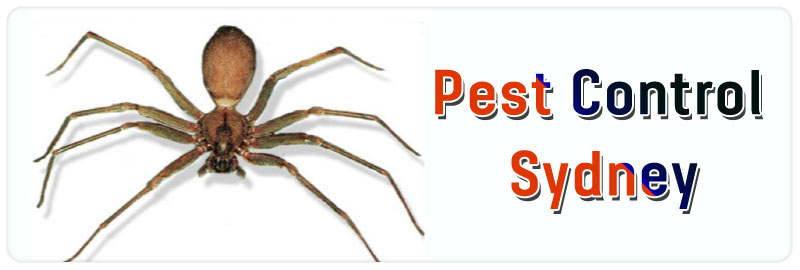 Pest Control Marks Point