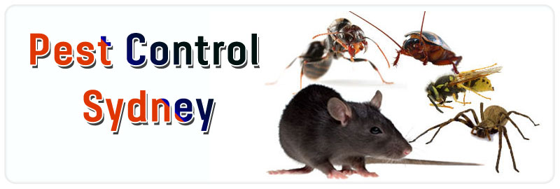 Pest Control State Mine Gully
