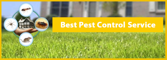 Pest Removal & Control Services
