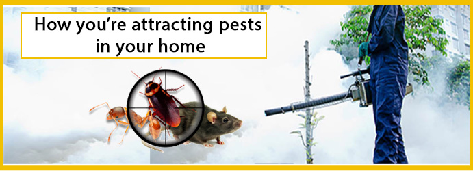 How you're attracting pests in your home