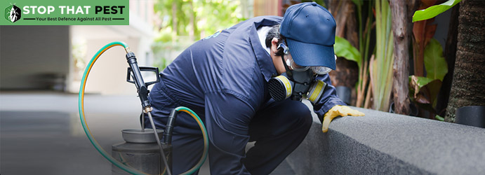 Professional Pest Control Services Brisbane