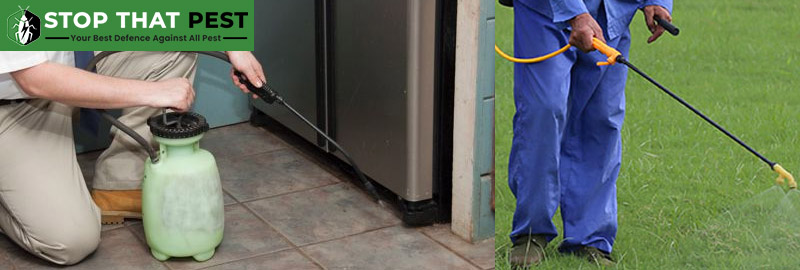 Professional Pest Control Services Woodvale