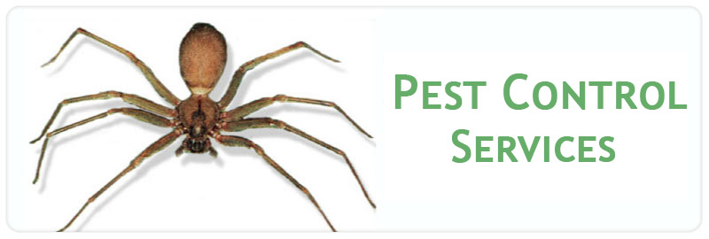 Professional Pest Control Pest Control Higher Macdonald