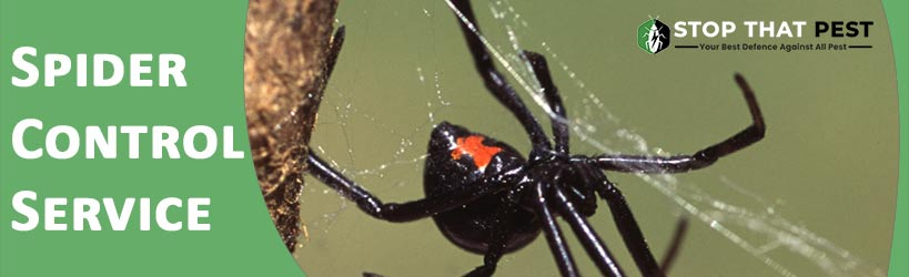 Important tips for Spider Pest Control