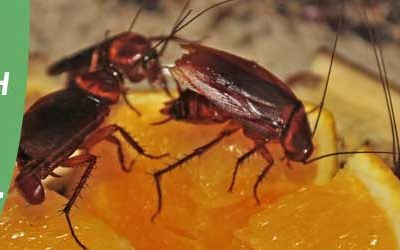How to Control Cockroach Populations