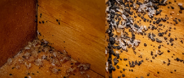 Get Rid of Bed-Bugs from Your House