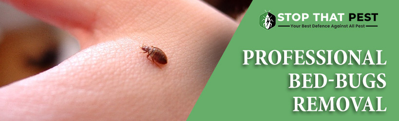 Professional Bed Bug Removal